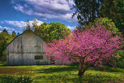 Farm Life Paintings Rob Moline - Pink Blossoms on the Farm by Joann Vitali