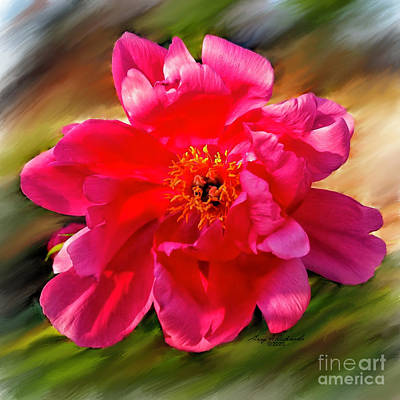 Superhero Ice Pop Rights Managed Images - Pink Common Peony Royalty-Free Image by Gary F Richards