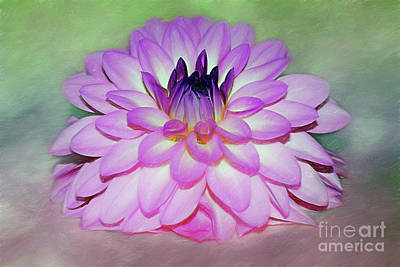 Holiday Mugs 2019 - Pink Dahlia Art by Kaye Menner by Kaye Menner