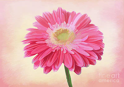 Royalty-Free and Rights-Managed Images - Pink Daisy by Lynn Bolt