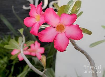 Animal Watercolors Juan Bosco - Pink desert roses  by On da Raks