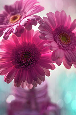 Royalty-Free and Rights-Managed Images - Pink Gerbera Daisy Trio  by Carol Japp