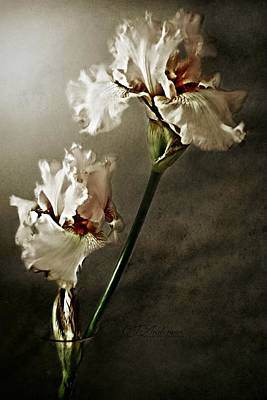 Amy Weiss - Pink Iris #36 by CJ Anderson