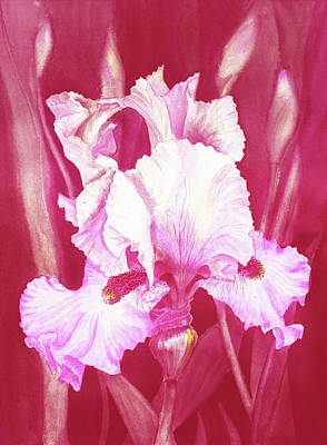 Royalty-Free and Rights-Managed Images - Pink Iris Flower In The Garden Watercolor   by Irina Sztukowski