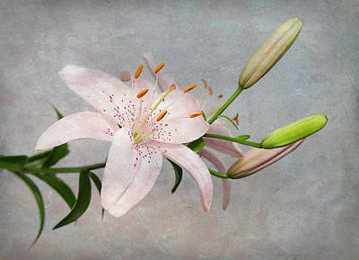 Wild Horse Paintings - Pink Lily with Texture by Patti Deters