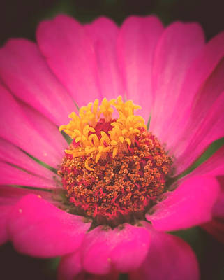 Surrealism Royalty-Free and Rights-Managed Images - Pink love 1.5 by Salvatore John Sgroi