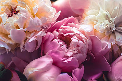 Royalty-Free and Rights-Managed Images - Pink peony flowers as floral art background, botanical flatlay and luxury branding design by Julien