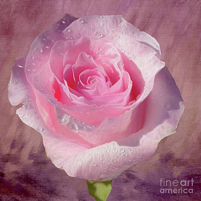 Classical Masterpiece Still Life Paintings - Pink Rose on Textured Background by Kaye Menner by Kaye Menner