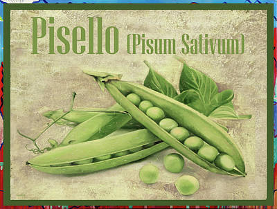 Royalty-Free and Rights-Managed Images - Pisello by Guido Borelli