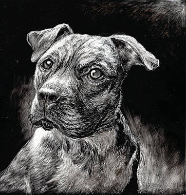 Drawing - Pit Bull by Ruth Renshaw