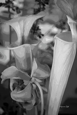 Ps I Love You - Pitcher Plant Vignette - Black and White Posterized by Suzanne Gaff