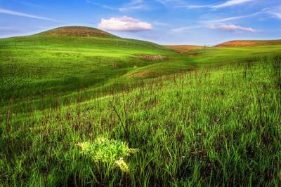 Going Green - Plains Indigo by Brad Mangas
