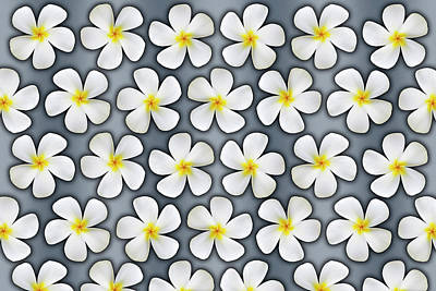 Photograph - Plumeria Flower Graphic on Silver by Kelley King