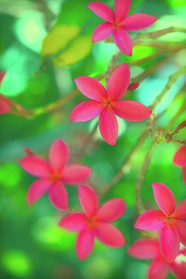 Royalty-Free and Rights-Managed Images - Plumeria Jungle Dream by Jade Moon