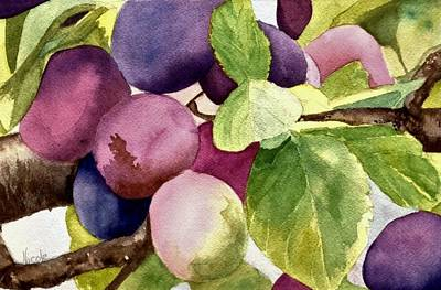 Royalty-Free and Rights-Managed Images - Plums for the Pudding by Nicole Curreri