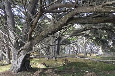Royalty-Free and Rights-Managed Images - Point Lobos Path by Luisa Millicent