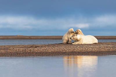 Photograph - Polar Bear Cubs at Play by Scott Slone