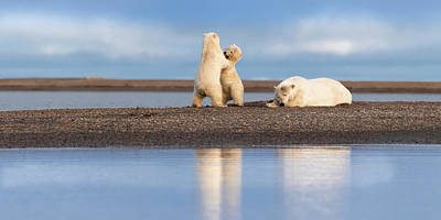 Photograph - Polar Bear Mom and Cubs by Scott Slone