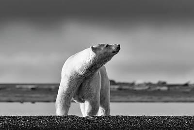 Photograph - Polar Bear by Scott Slone