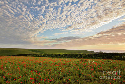 Classic Christmas Movies - Polly Joke Flower Field Sunset by Terri Waters