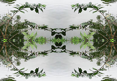 Photograph - Pond Mirror by Sherrie Hall