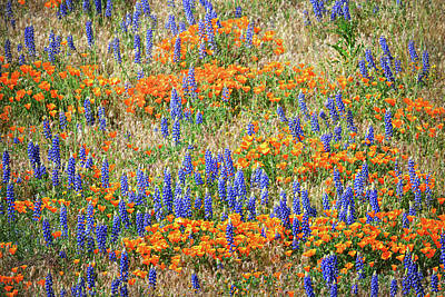Vintage College Subway Signs Color - Poppies and Lupines at Gorman, California by Brian Tada