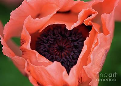 Photograph - Poppy Art Heart by Karen Adams