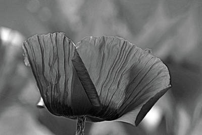 Namaste With Pixels Royalty Free Images - Poppy Black And White Royalty-Free Image by Debbie Oppermann