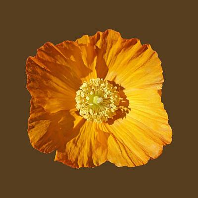 Painting - Poppy by Charles Stuart