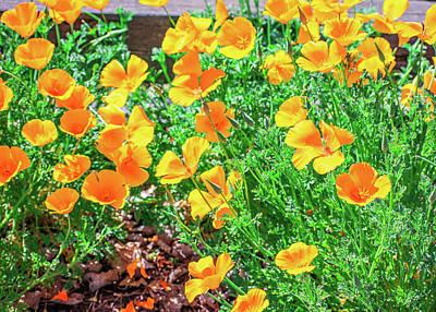 Animal Paintings David Stribbling - Poppy Flowers Sunny Landscape  by Lucia Vega