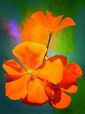 Abstract Graphics - Poppy Mania, by Christina Ford