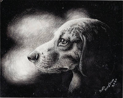 Drawing - Portrait Of A Dog by Ruth Renshaw