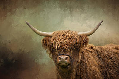 World Forgotten - Portrait Of A Highland Cattle Cow by Diana Van Tankeren