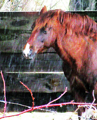 Animals Royalty-Free and Rights-Managed Images - Portrait Of A Horse Under Cover In A Sleet Storm by Patricia Keller