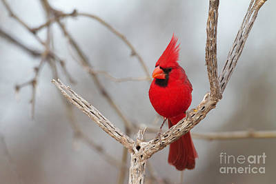 Hollywood Style - Pretty bird in Red by Bryan Keil