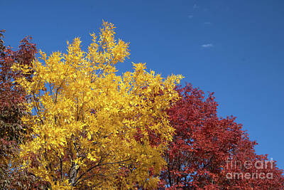 Photograph - Primary Colors by Nicki Hoffman