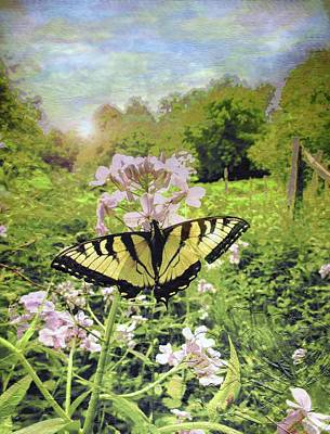 David Bowie Royalty Free Images - Sweet William Wildflowers And The Butterfly                             Royalty-Free Image by Patricia Keller