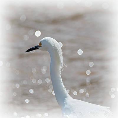 Moody Trees - Profile of a Snowy Egret  by Debra Martz