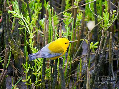 David Bowie Royalty Free Images - Prothonotary Warbler Royalty-Free Image by Gary Richards