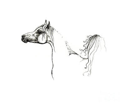 Animals Drawings - Proud As Arabian 1 by Angel Ciesniarska