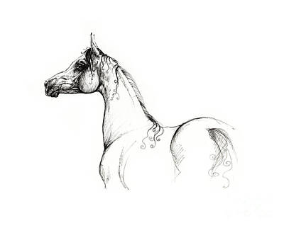 Animals Drawings - Proud As Arabian by Angel Ciesniarska