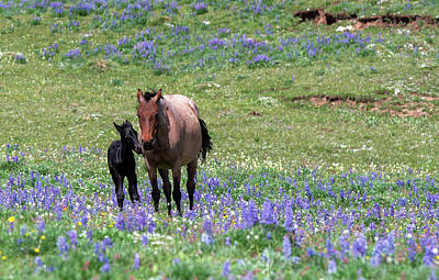 Achieving - Pryor Mountain Newborn  by Douglas Wielfaert