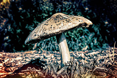 Photograph - Psychedelic Mushroom by Kelley King