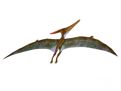David Bowie Royalty Free Images - Pteranodon Wings Extended Royalty-Free Image by Corey Ford
