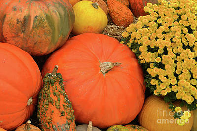 Pop Art - Pumpkin and Mum Still Life  by Regina Geoghan