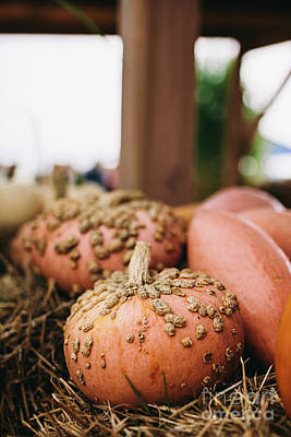 Anne Geddes Florals - Pumpkin farm market. Decorative pumpkins lying on hay. by Michal Bednarek