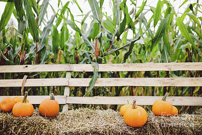 Watercolor Alphabet Rights Managed Images - Pumpkins lying on hay on the farm. Halloween and Thanksgiving Royalty-Free Image by Michal Bednarek