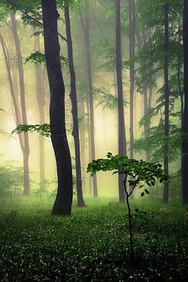 Patriotic Signs - Pure Nature by Evgeni Dinev