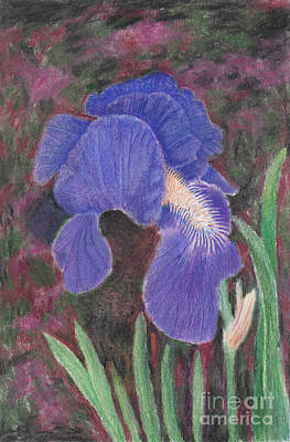 Abstract Stripe Patterns - Purple Bearded Iris Drawing by Conni Schaftenaar