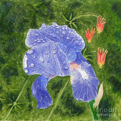 Mixed Media Royalty Free Images - Purple Blue Iris with Rain Drops and Wild Columbine Royalty-Free Image by Conni Schaftenaar